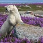 Αρκούδα-άνοιξη
