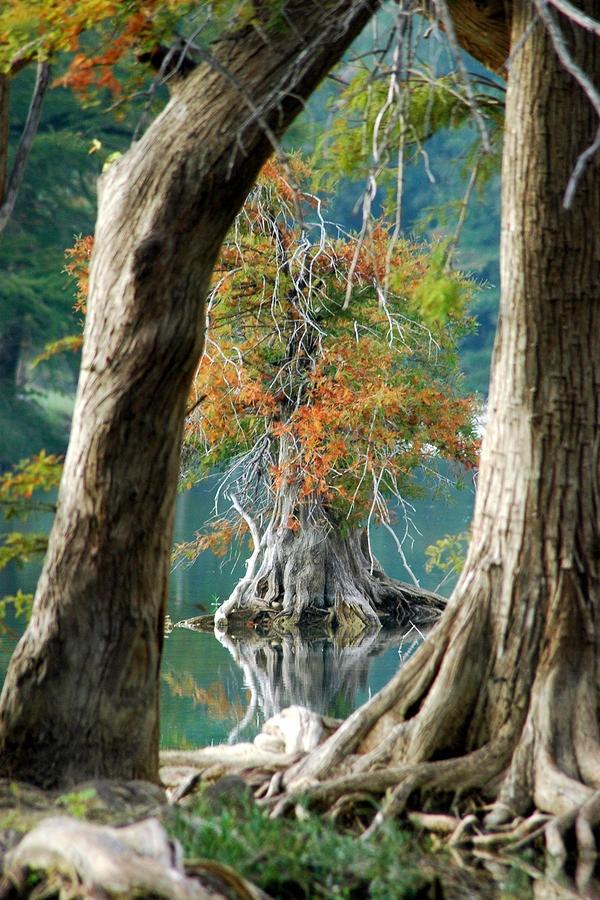 Εξαιρετικές Εικόνες της Φύσης13