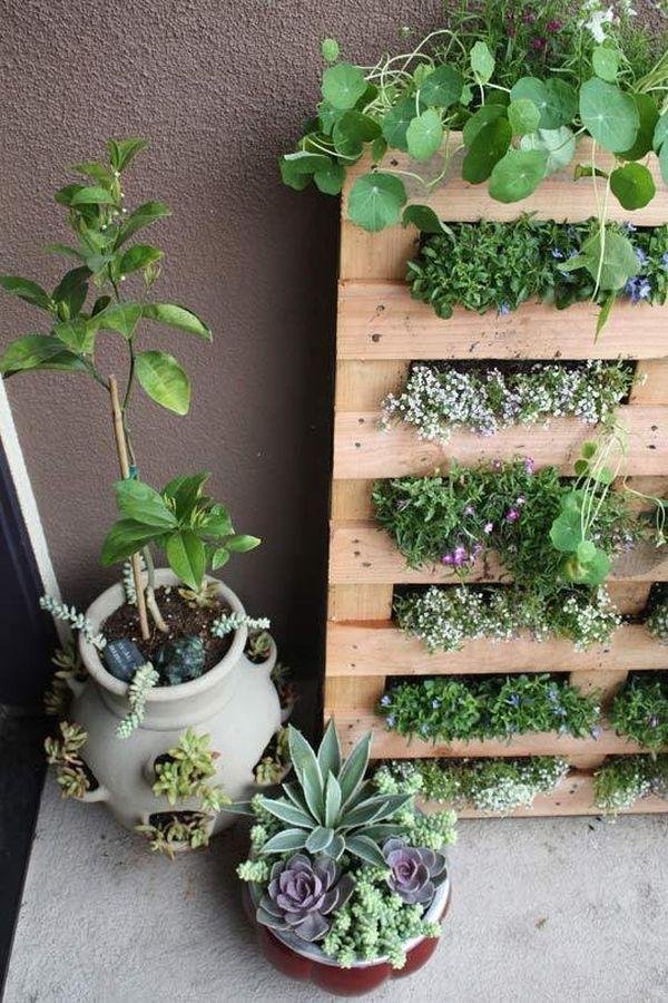 DIY σχέδια κάθετου κήπου13