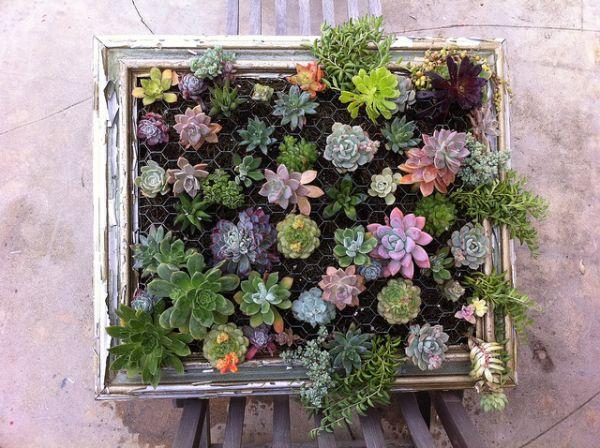 DIY σχέδια κάθετου κήπου8