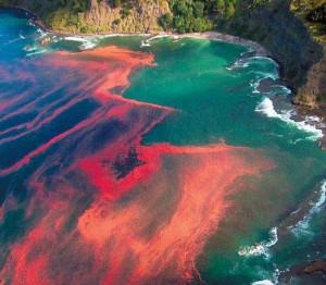 Η Κόκκινη παλίρροια (Red Tide)2