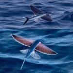 Το ιπτάμενο ψάρι