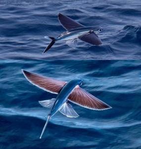 1. Exocoetidae – Το ιπτάμενο ψάρι