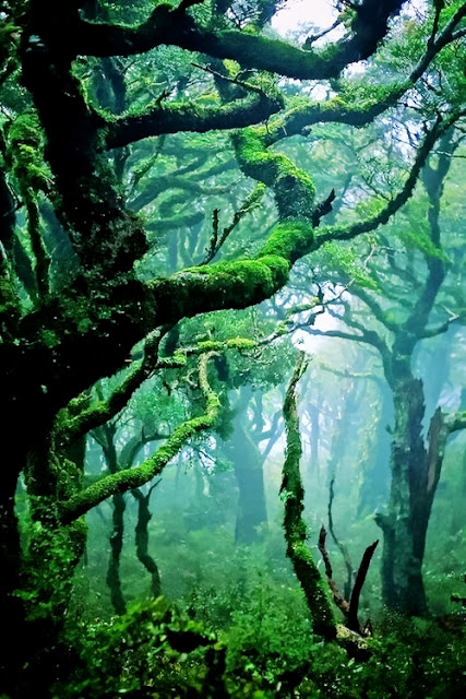 Beautiful-Nature-Copy