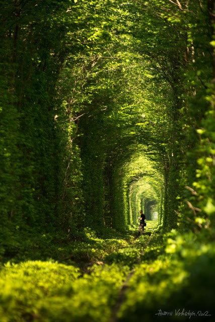 Green-natural-tunnel-Klevan-City-Ukraine-Copy