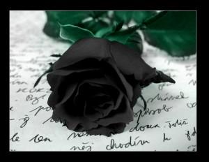 rose-22