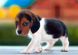 Σκυλί1