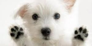 Σκυλί2