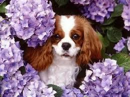 Σκυλί3
