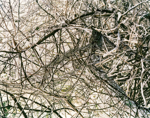 Thicket2
