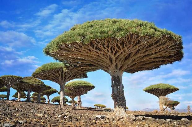 Δράκαινα-Ιεμένη