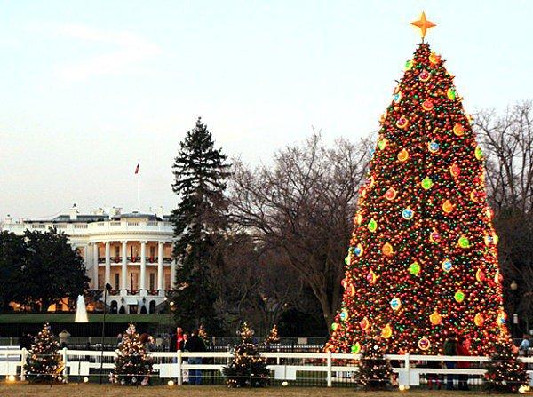 Τα πιο όμορφα χριστουγεννιάτικα δέντρα στον κόσμο13