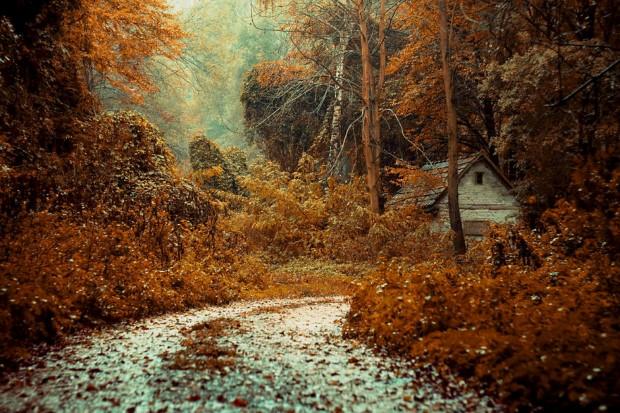 σπίτια στη μέση της φύσης27