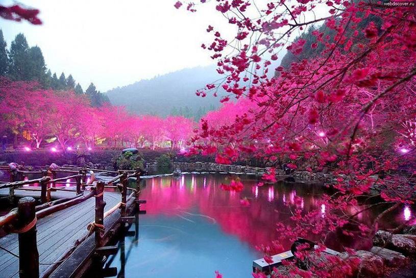 Cherry Blossom Lake, Japan