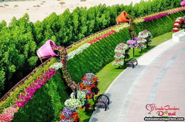 Marvelous-Dubai-Miracle-Garden-7