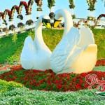 Marvelous-Dubai-Miracle-Garden, Swans