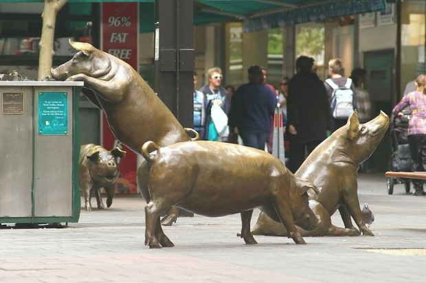 Pigs on the trip, Adelaide, Australia