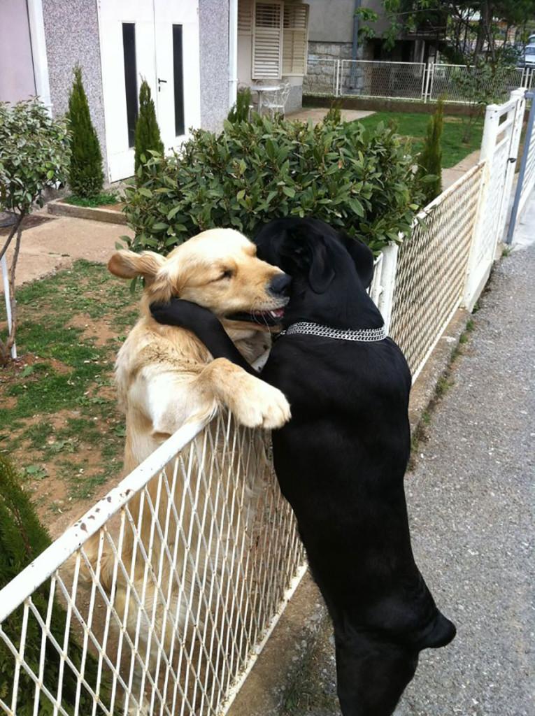 Ζευγάρια ζώων που αποδεικνύουν ότι η αγάπη υπάρχει και στο ζωικό Βασίλειο 1