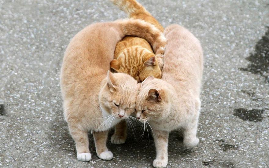 Ζευγάρια ζώων που αποδεικνύουν ότι η αγάπη υπάρχει και στο ζωικό Βασίλειο 10