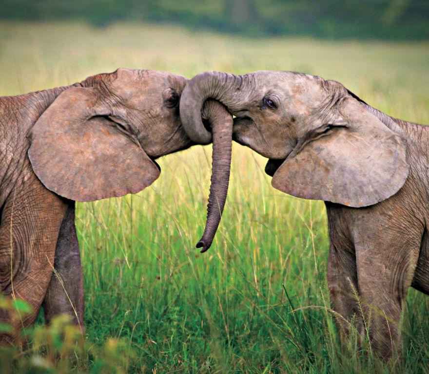Ζευγάρια ζώων που αποδεικνύουν ότι η αγάπη υπάρχει και στο ζωικό Βασίλειο 16