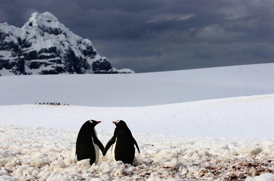Ζευγάρια ζώων που αποδεικνύουν ότι η αγάπη υπάρχει και στο ζωικό Βασίλειο 2
