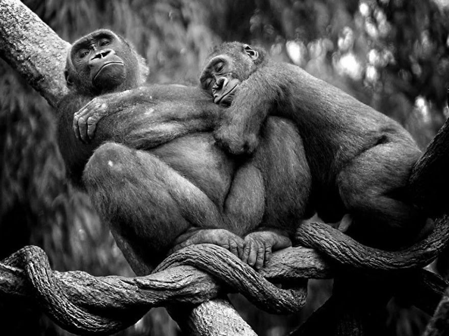Ζευγάρια ζώων που αποδεικνύουν ότι η αγάπη υπάρχει και στο ζωικό Βασίλειο 20