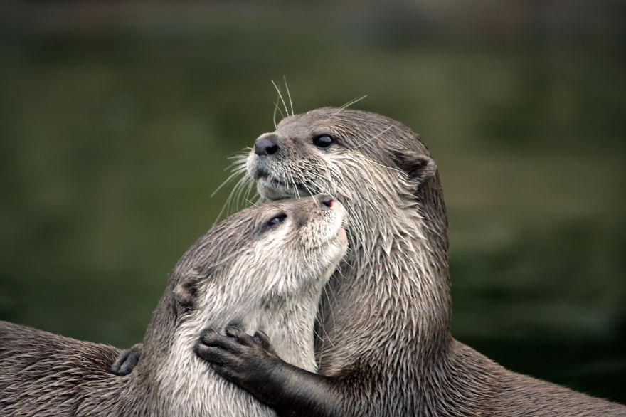 Ζευγάρια ζώων που αποδεικνύουν ότι η αγάπη υπάρχει και στο ζωικό Βασίλειο 21