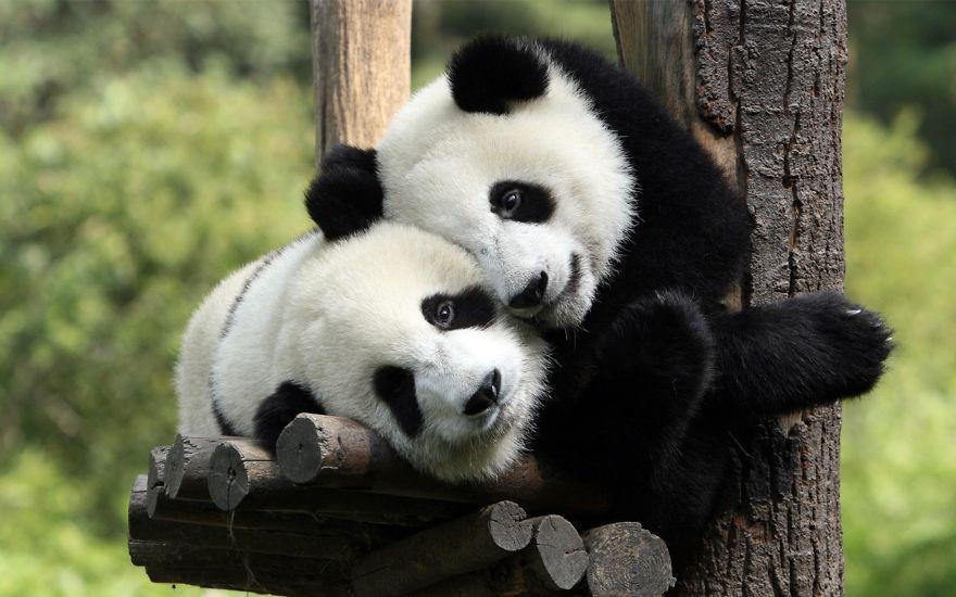 Ζευγάρια ζώων που αποδεικνύουν ότι η αγάπη υπάρχει και στο ζωικό Βασίλειο 22