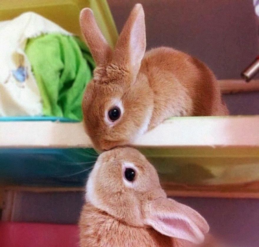 Ζευγάρια ζώων που αποδεικνύουν ότι η αγάπη υπάρχει και στο ζωικό Βασίλειο 23