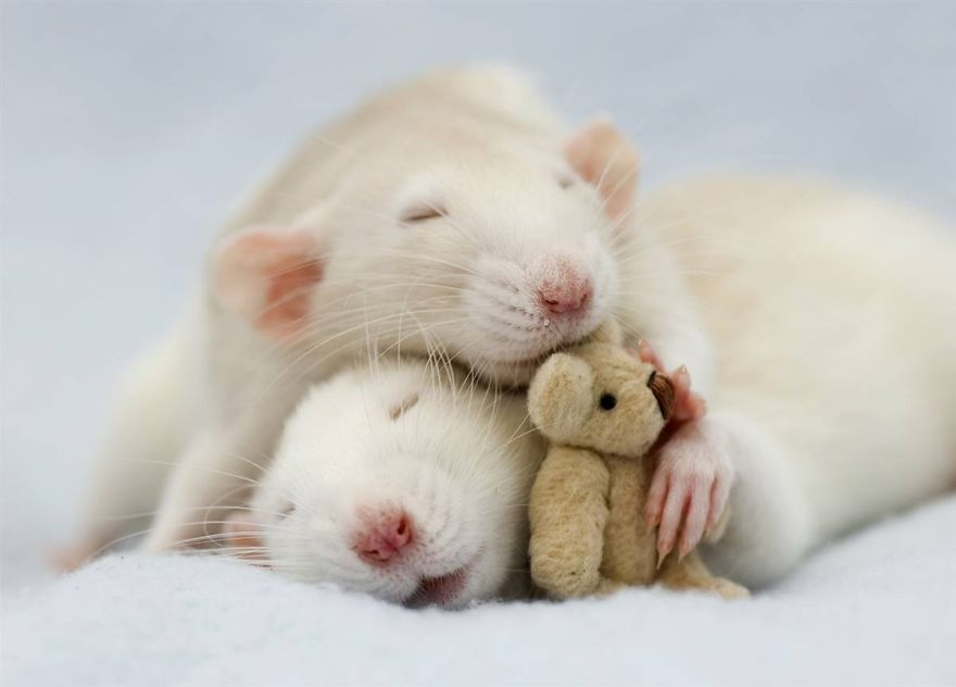 Ζευγάρια ζώων που αποδεικνύουν ότι η αγάπη υπάρχει και στο ζωικό Βασίλειο 25