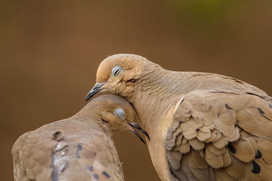 Ζευγάρια ζώων που αποδεικνύουν ότι η αγάπη υπάρχει και στο ζωικό Βασίλειο 26