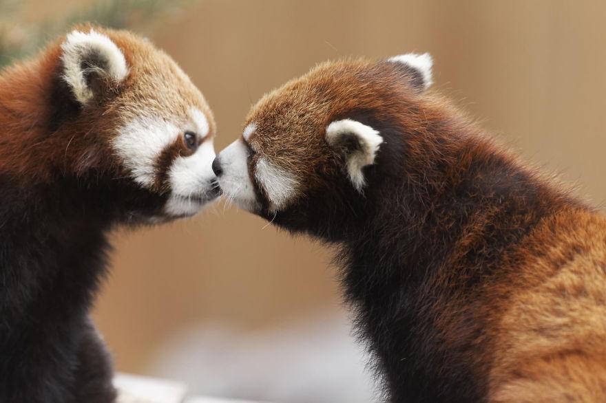Ζευγάρια ζώων που αποδεικνύουν ότι η αγάπη υπάρχει και στο ζωικό Βασίλειο 28
