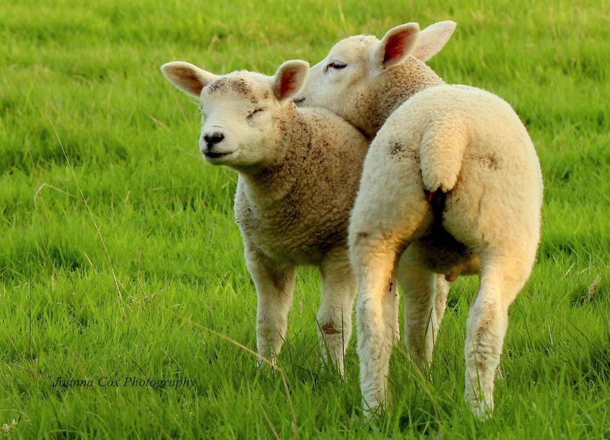 Ζευγάρια ζώων που αποδεικνύουν ότι η αγάπη υπάρχει και στο ζωικό Βασίλειο 29