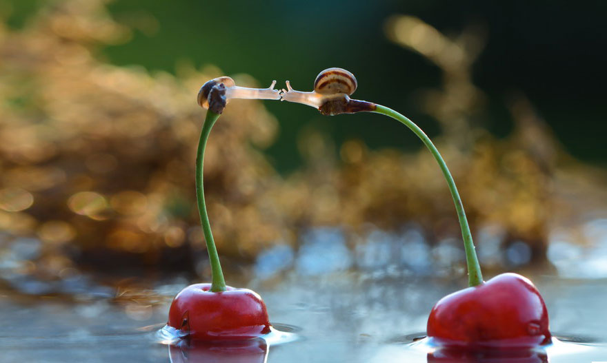 Ζευγάρια ζώων που αποδεικνύουν ότι η αγάπη υπάρχει και στο ζωικό Βασίλειο 3