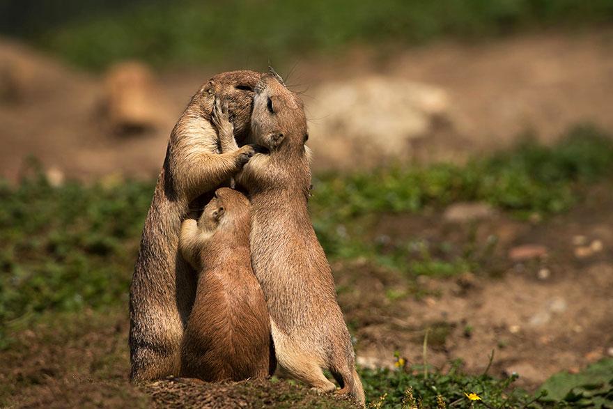 Ζευγάρια ζώων που αποδεικνύουν ότι η αγάπη υπάρχει και στο ζωικό Βασίλειο 5