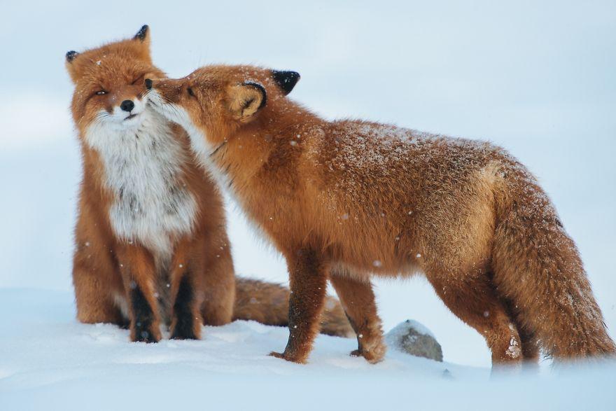 Ζευγάρια ζώων που αποδεικνύουν ότι η αγάπη υπάρχει και στο ζωικό Βασίλειο 6
