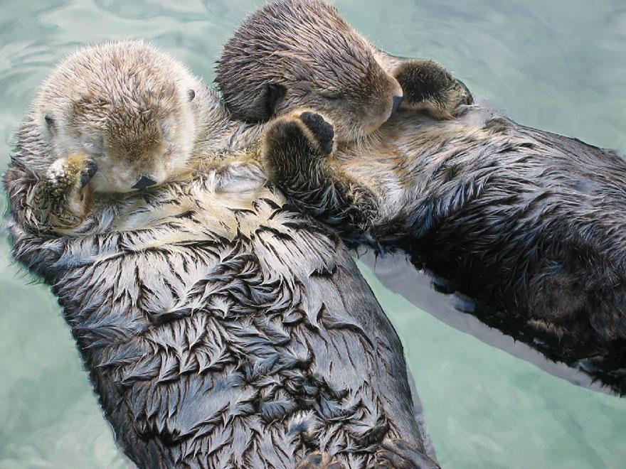 Ζευγάρια ζώων που αποδεικνύουν ότι η αγάπη υπάρχει και στο ζωικό Βασίλειο 7