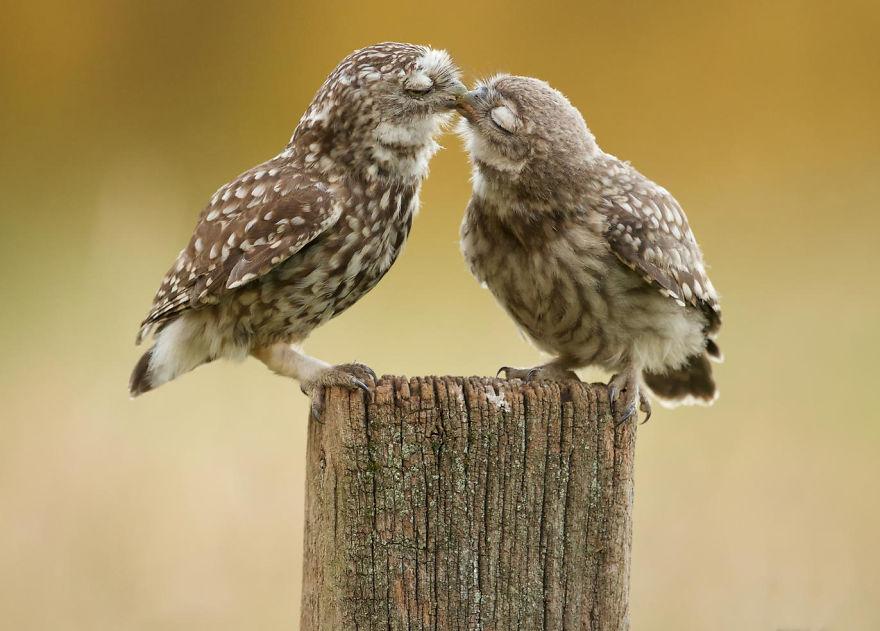 Ζευγάρια ζώων που αποδεικνύουν ότι η αγάπη υπάρχει και στο ζωικό Βασίλειο 8