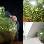 Σφραγισμένη φιάλη Κήπος ευδοκιμεί για 53 χρόνια με ένα πότισμα