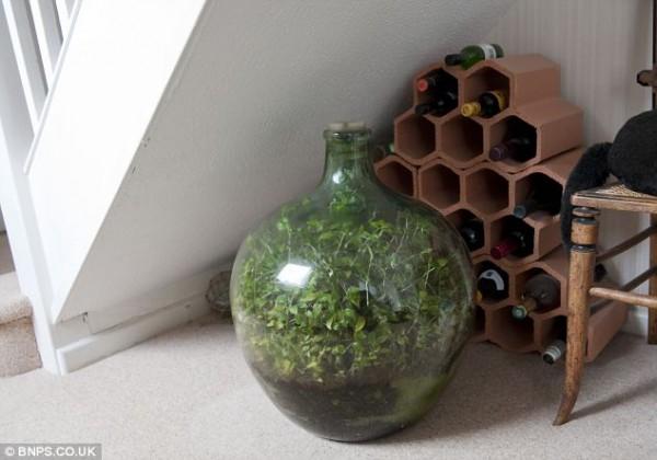 Σφραγισμένη φιάλη Κήπος ευδοκιμεί για 53 χρόνια με ένα πότισμα3