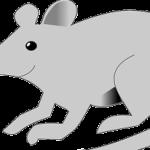 διώξτε τα ποντίκια φυσικά