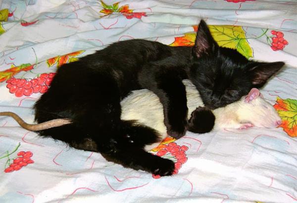 Η γάτα και το ποντίκι