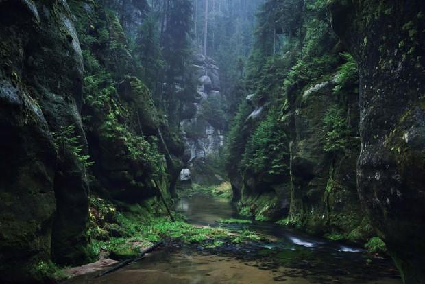 Μέσα στο πράσινο δάσος