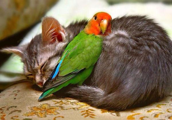 Παπαγάλος και γατάκι
