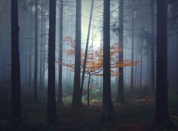 Το δάσος με τα έλατα