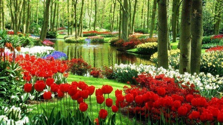 Keukenhof Garden 01