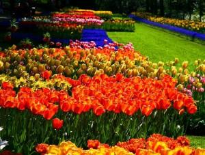 Keukenhof Garden 06