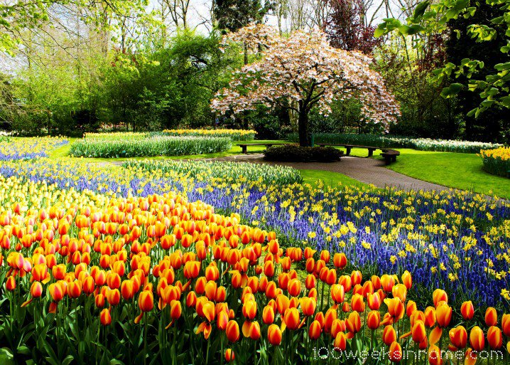 Keukenhof Garden 04