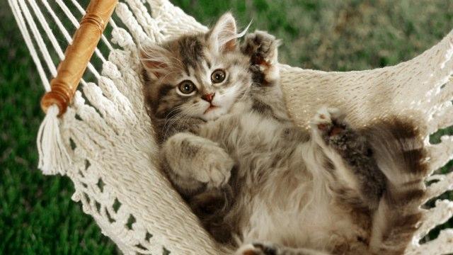 Γατάκι στην αιώρα
