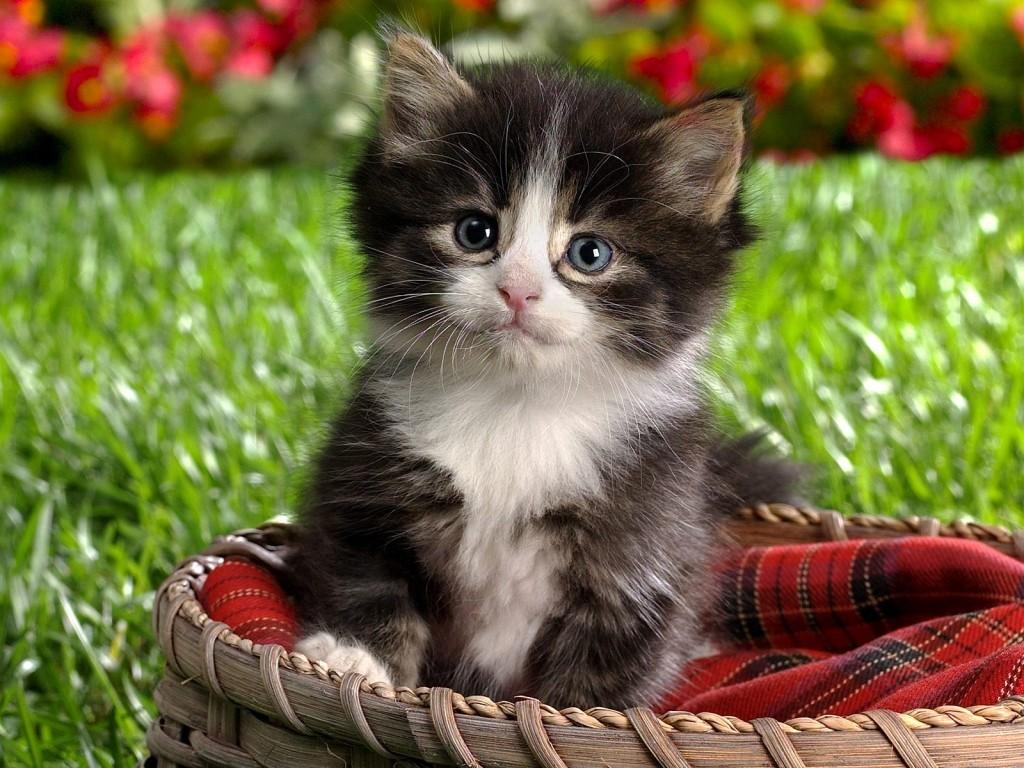 Γατάκι στον κήπο